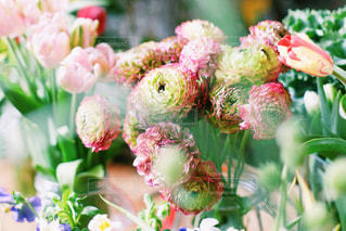 花の写真・画像素材[571424]