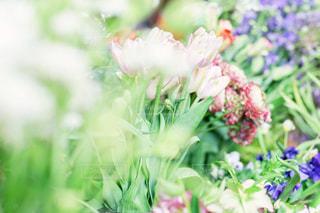 花の写真・画像素材[571425]