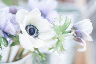 花の写真・画像素材[571426]