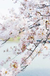 花の写真・画像素材[571428]