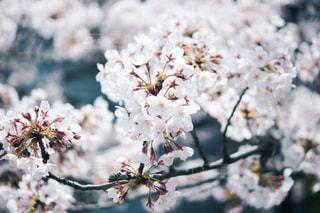 花の写真・画像素材[571431]