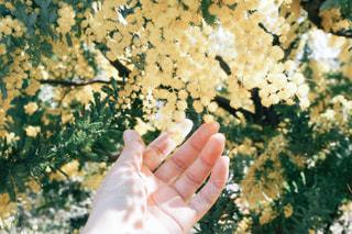 花の写真・画像素材[571519]