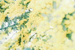 花の写真・画像素材[571520]