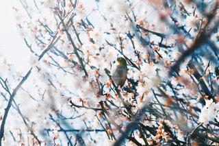 花の写真・画像素材[571559]