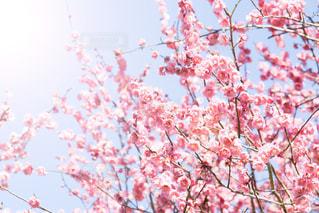 春の写真・画像素材[572046]