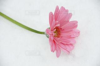 花の写真・画像素材[585419]