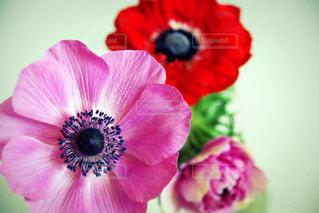 花の写真・画像素材[585420]