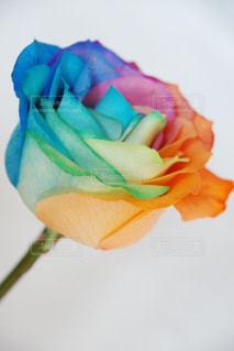 花の写真・画像素材[585422]
