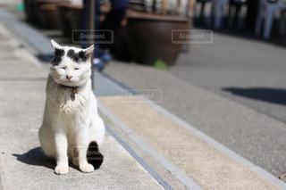 猫 - No.571548