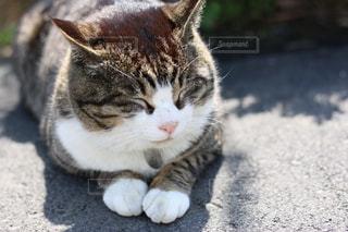 猫 - No.575318