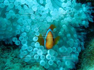 魚 - No.615466