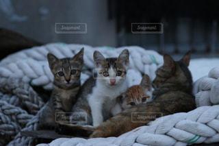 猫 - No.615467
