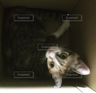 猫の写真・画像素材[588753]