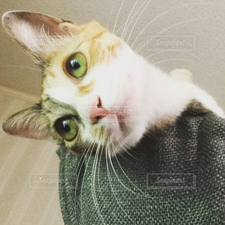 猫の写真・画像素材[594782]