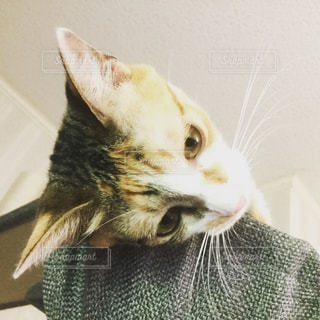 猫の写真・画像素材[594783]