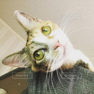 猫 - No.594784