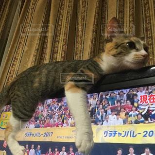 ベッドの上で横になっている猫の写真・画像素材[731025]