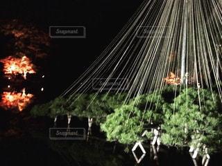 暗闇の中のツリー - No.891677