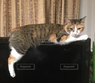 テーブルの上に座ってる猫の写真・画像素材[954030]