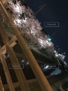 No.577848 夜桜