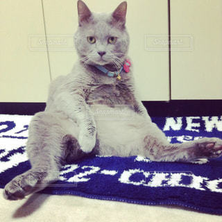 No.572043 猫