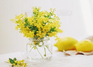 花の写真・画像素材[572354]