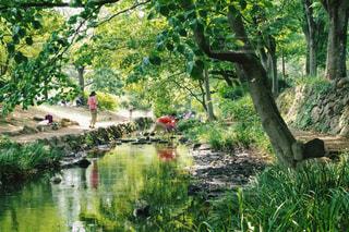木の隣に水します。の写真・画像素材[1219159]
