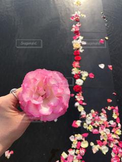 花の写真・画像素材[572485]