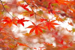 秋の写真・画像素材[572506]