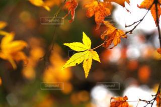 秋の写真・画像素材[572507]