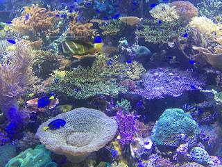 魚の写真・画像素材[572611]