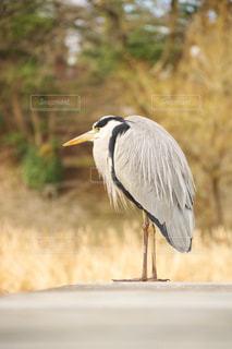 鳥の写真・画像素材[572618]