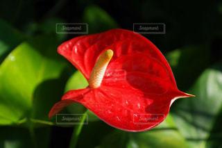 花の写真・画像素材[576385]