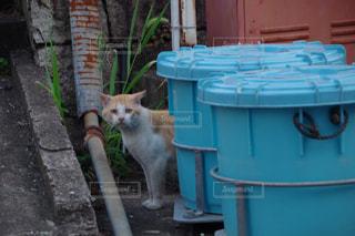 猫の写真・画像素材[602068]