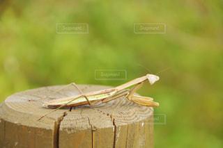 虫の写真・画像素材[605703]