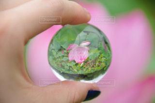 花の写真・画像素材[644686]