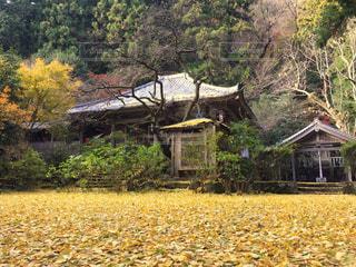 茂みや木の家 - No.917117