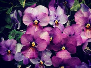黄色と紫の花の束 - No.917145