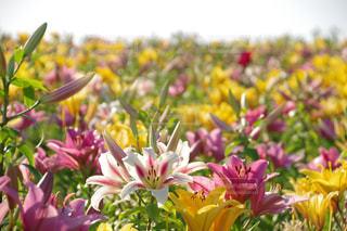 近くの花のアップの写真・画像素材[1270921]