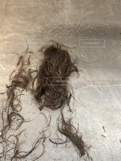 髪の写真・画像素材[2064092]