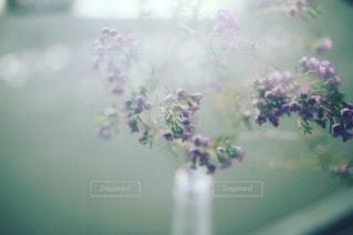 近くの花のアップの写真・画像素材[1621872]