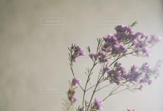 紫色の花一杯の花瓶の写真・画像素材[1621880]