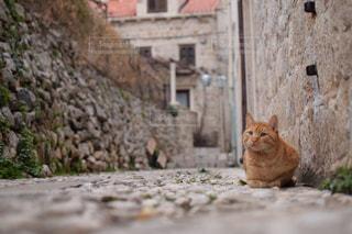 猫の写真・画像素材[572865]