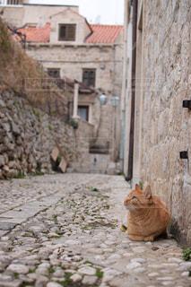 猫の写真・画像素材[572869]