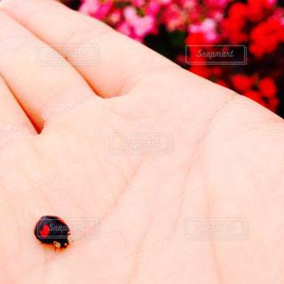 花の写真・画像素材[573032]