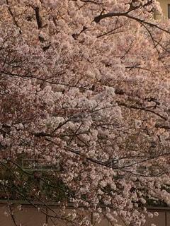 No.574125 春