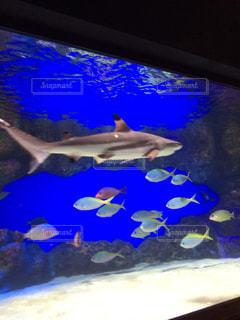 サメの写真・画像素材[574520]