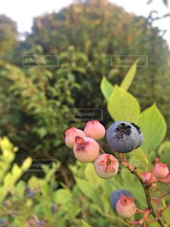 自然の写真・画像素材[651351]