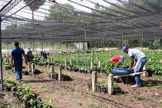 菜園 働く人々の写真・画像素材[1005626]