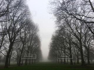 公園の写真・画像素材[573816]